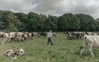 At Hectar, a farm in France that serves as a training ground, a veterinarian, Julie Renoux, cares for the cows. Credit...Andrea Mantovani for The New York Times